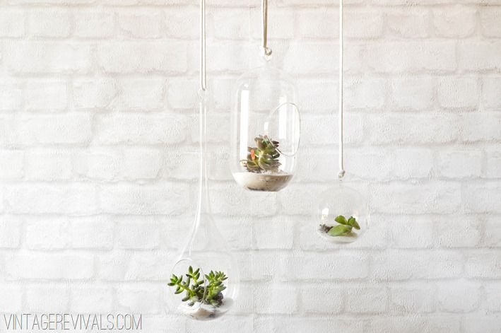 Where To Buy Glass Terrariums