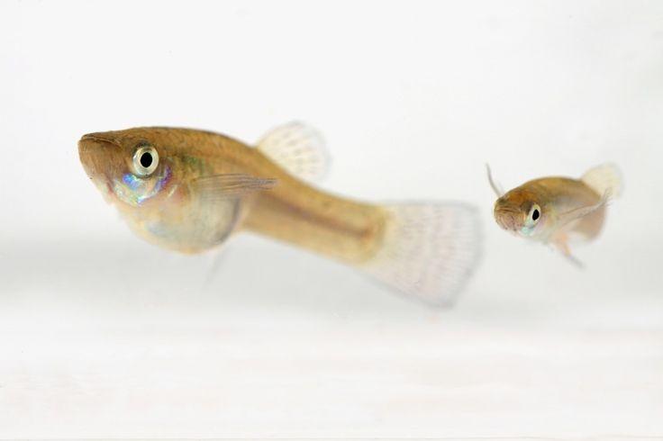 Fish - Aquatica Environmental
