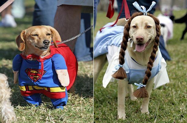 Фото карнавальных костюмов на собаках