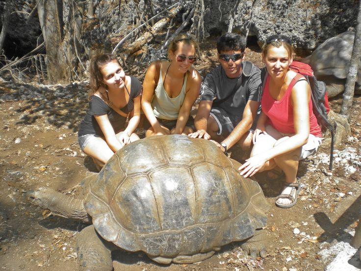 While volunteering Zanzibar visit Prison Islands and meet the giant tortoise. http://bit.ly/Zanzibarvolunteer?utm_content=buffer79be3&utm_medium=social&utm_source=pinterest.com&utm_campaign=buffer