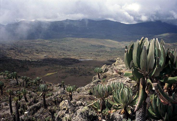 Mt Elgon caldera