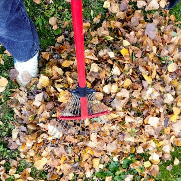 Fall Yard Cleanup 8 Shortcuts For Easy Care Yard Care Garden Yard