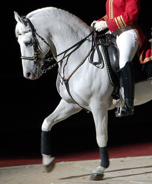 Lippizaner Stallion. Absolutely beautiful... I've seen them perform twice. Once here in Houston, and once in Vienna at the Spanish Riding School :)