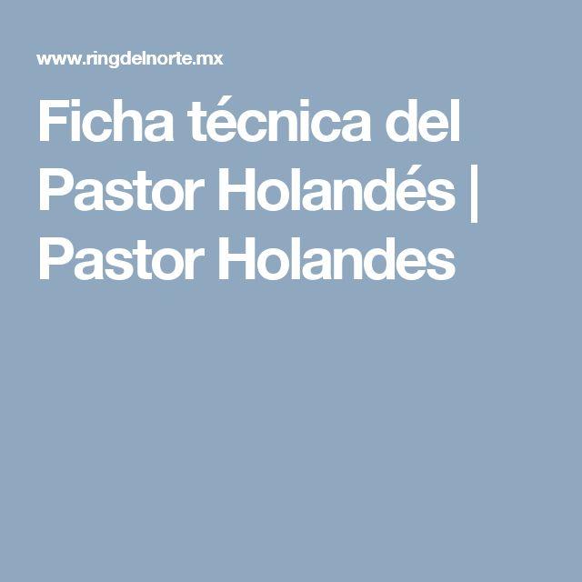 Ficha técnica del Pastor Holandés | Pastor Holandes