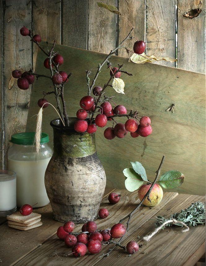 Tak van de appelboom met kleine appeltjes.