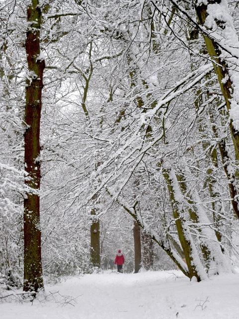 とことん青空のない木の写真にこだわって。ナルニアの世界、ということで(読んでいないくせにすみません)。DSCN2059, via Flickr.