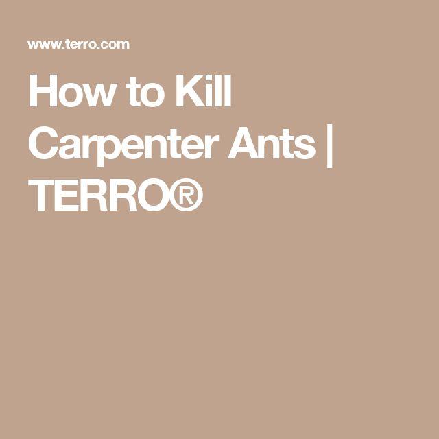 How to Kill Carpenter Ants | TERRO®