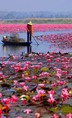 Red Lotus Sea, Thailand Plus
