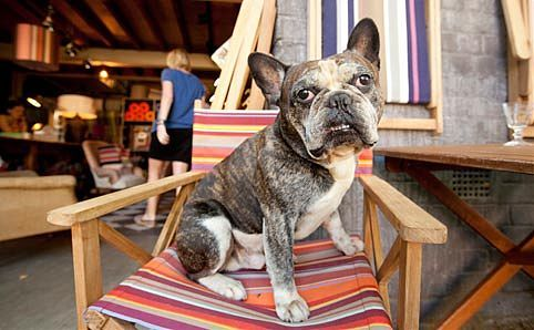 """""""Ici et La""""   7 Nickson St, Surry Hills. Surry Hills French interiors store ici et là (it means 'here and there') has gathered a strong following for its collection of antique French deckchairs, zinc letters, industrial light shades and vibrant striped fabrics."""