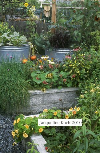The low maintenance garden with Valerie Easton - National home and living | Examiner.com