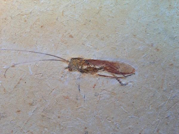Cretaceous–Paleogene extinction event