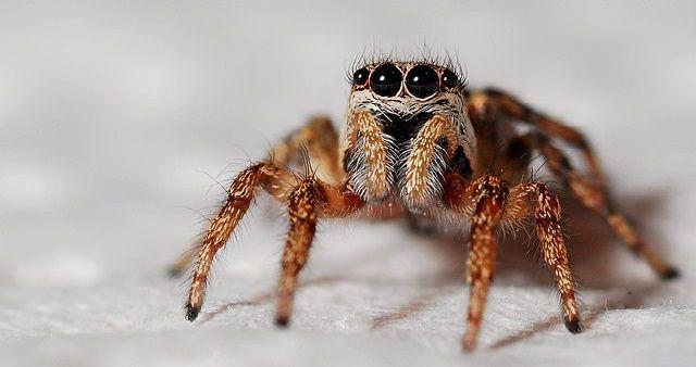 Cos'è la Aracnofobia? Il ragno è un animale le cui caratteristiche hanno e stimolato l'immaginazione umana nel folklore e nella mitologia di vari...