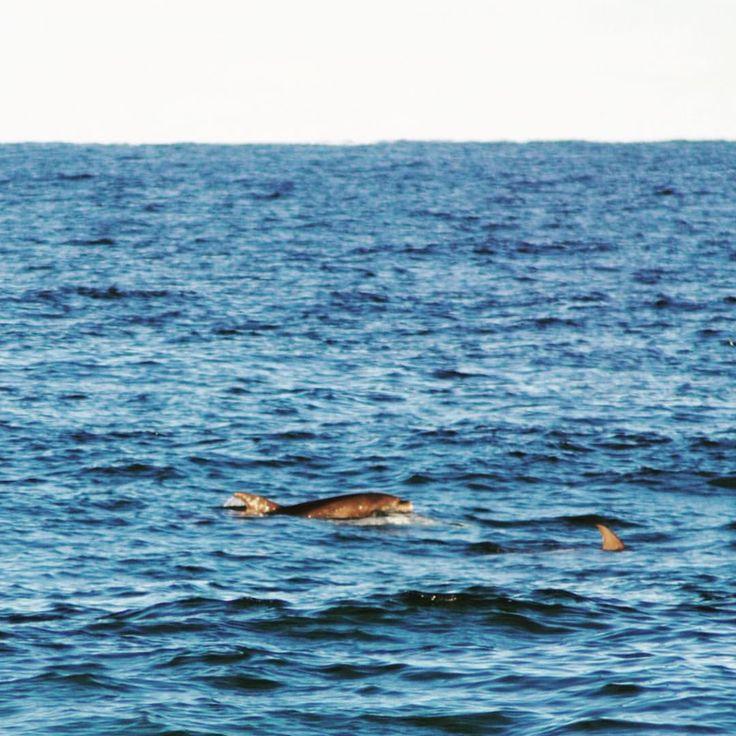 Wishing everyone a cruisy #sundayafternoon  #weekendvibes #malibuonthebeachtas #dolphinwatching #dolphins