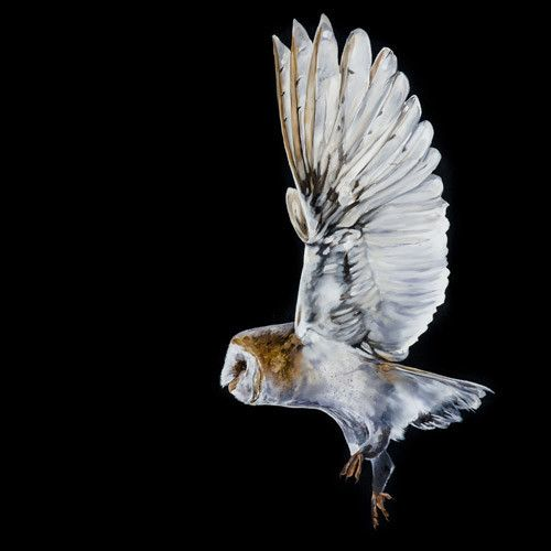 **SPECIAL LIMITED EDITION** Fine Art Giclée Print On Silent Wings