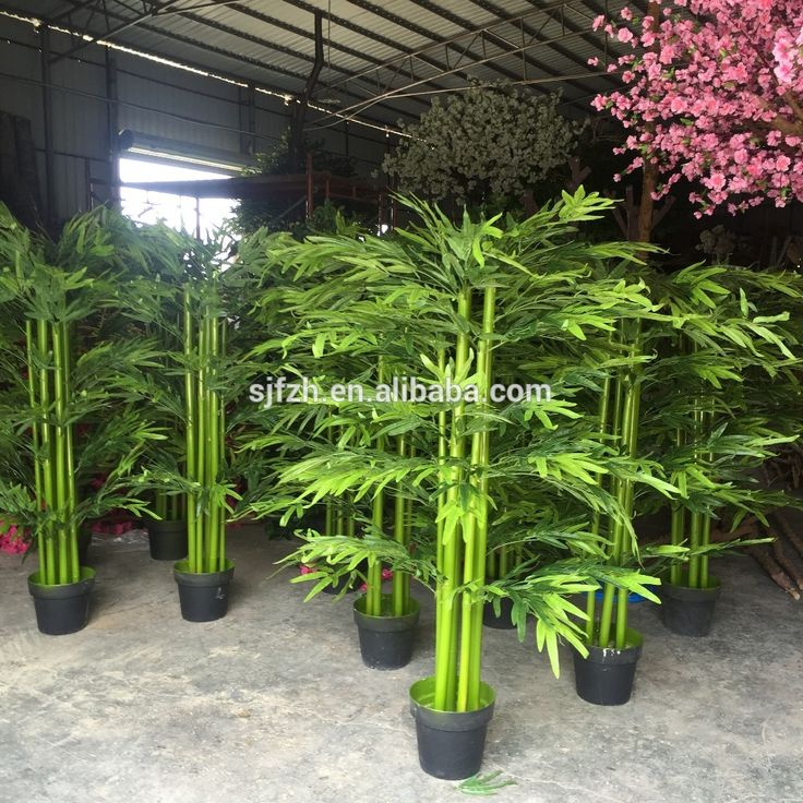 1000 ideas about growing bamboo indoors on pinterest growing bamboo lucky bamboo plants and. Black Bedroom Furniture Sets. Home Design Ideas