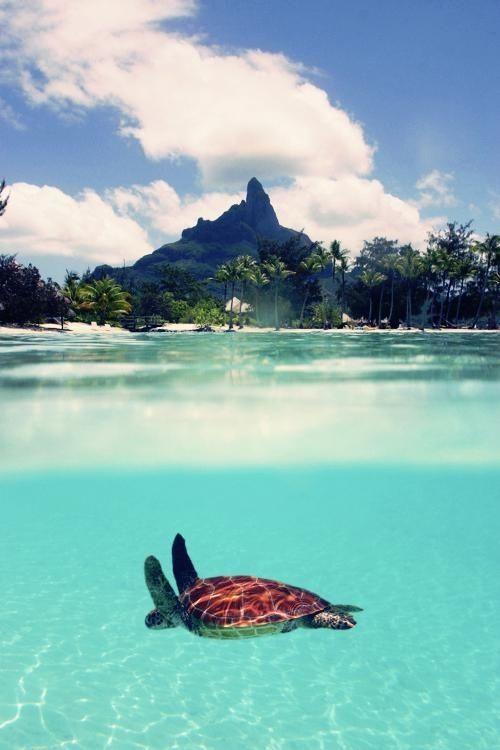 Sea Turtle in Bora Bora, French Polynesia