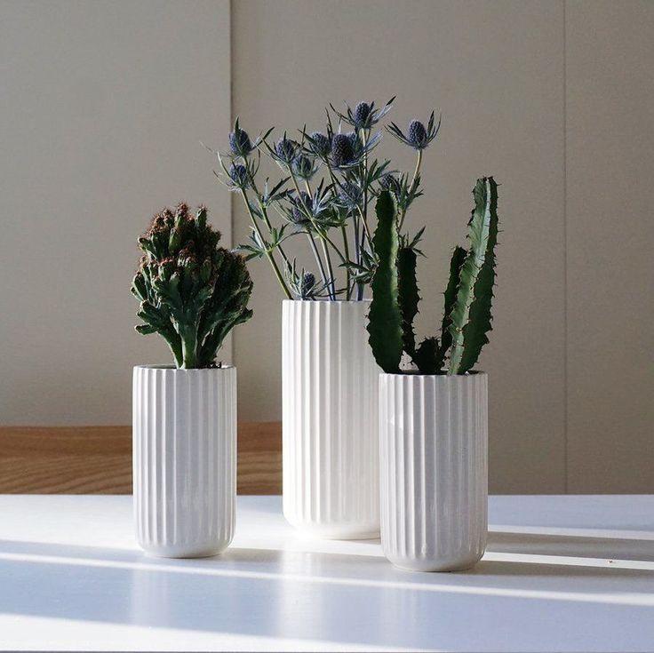 86 besten zimmerpflanzen bilder auf pinterest. Black Bedroom Furniture Sets. Home Design Ideas