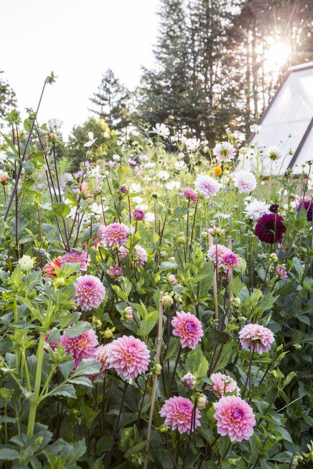 Behind the Scenes: Cut Flower Garden - Sunset Magazine