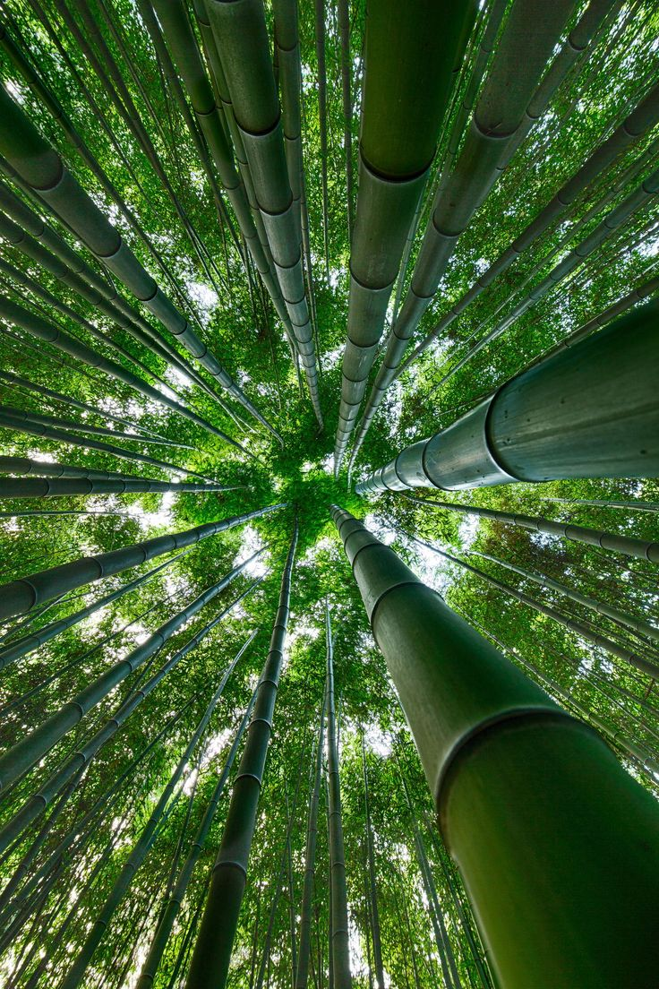 Bamboo forest by Jason Teale