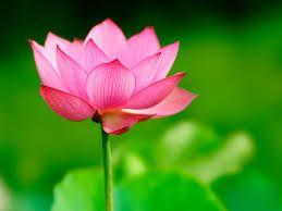 Creating Web Application with Ruby Lotus    kim hirokuni