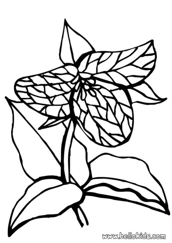 This Carnivore Flower Coloring Page Would Make A Cute Present For Your Parents Perfect