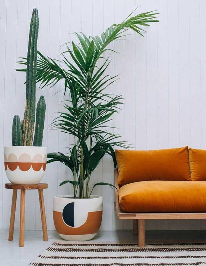 Les 171 meilleures images propos de plantes d 39 int rieur - Plantes et jardin interieur dans un appartement design kiev ...