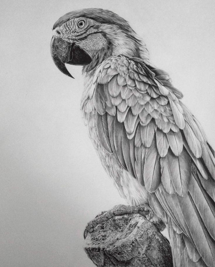 Os incríveis desenhos fotorrealistas a lápis de Monica Lee 07