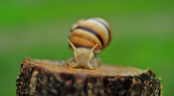 A rainy day and a snail. #salyangoz #snail