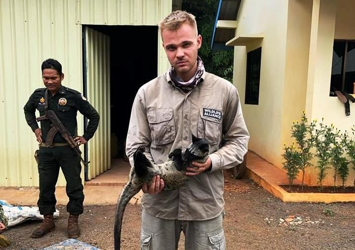 December 12, 2017 - Chhay Areng Patrol Station    In the morning, the head ranger Robod Mitya reported an injured Civet that urgently needs care after being snared. Unfortunately the animal died on the ranger's hands on the way to Phnom Tamao Wildlife Rescue Center.  Grief for such an animal might be considered