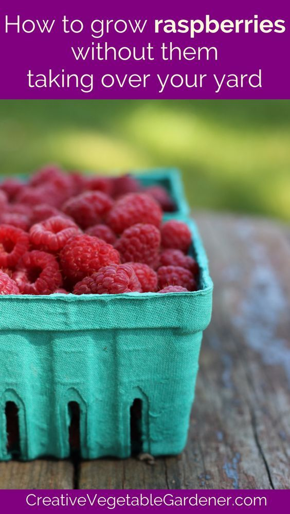 The best way to grow raspberries so they don't spread and take over.