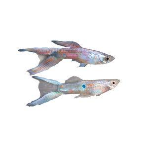 35 best images about aquariums on pinterest live fish for Petsmart live fish