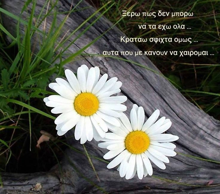 Η χαρά και η ευτυχία πηγάζουν από μέσα μας... ... ...  Ακόμα και όταν η ζωή φαίνεται σαν έρημος,,, ,,, ,,,  μπορείς να βρεις ένα λουλούδι!!!