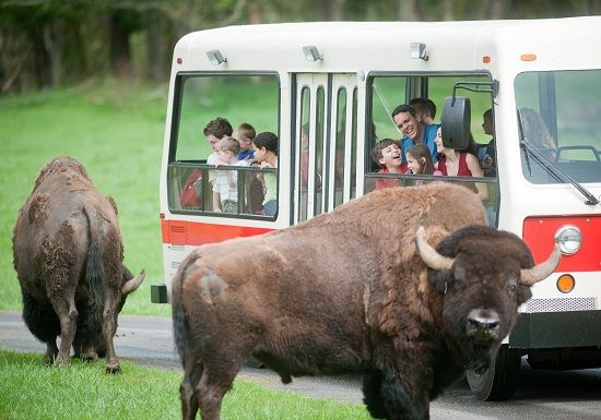If you want to get up close and personal with a variety of animals, take a day trip out of Seattle to the Northwest Trek Wildlife Park.