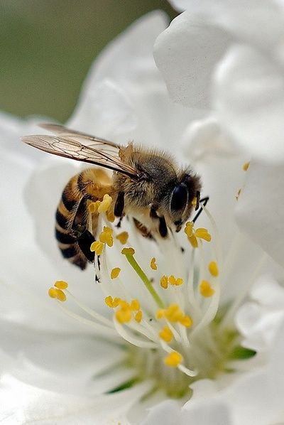 Honey Bee mattters. Besides being cute, honey bees play a vital role in our environment and life. Google to find out how.