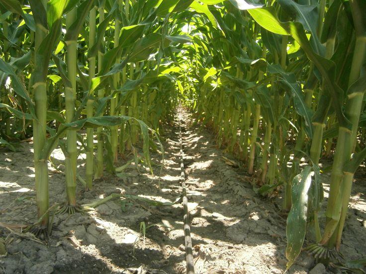 Oltre 25 fantastiche idee su irrigazione a goccia su pinterest for Tecniche di irrigazione