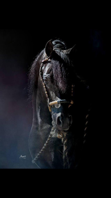 Gorgeous black horse.                                                                                                                                                      Más
