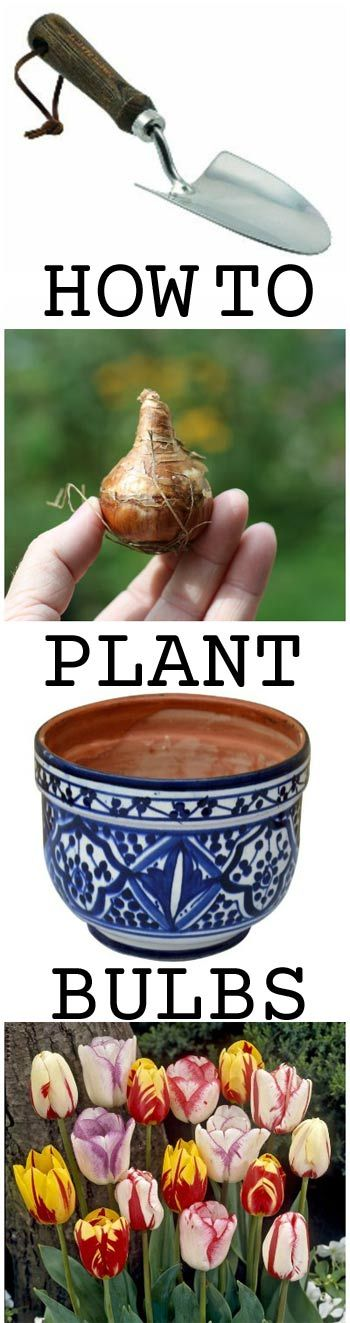 How To Plant Bulbs - get started now | empress of dirt on #ebay
