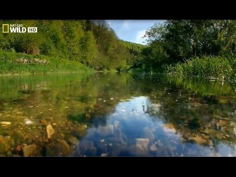 National Geographic. Дунай. Европейская Амазонка. Документальный фильм.