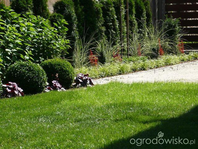 Ogrodowy powrót do dzieciństwa. - strona 646 - Forum ogrodnicze - Ogrodowisko