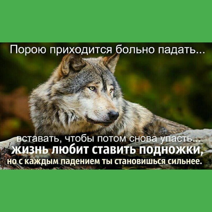 Pin by Ольга Бушуева on Статусы про волков