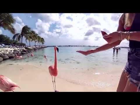 Una spettacolare spiaggia affollata di... fenicotteri rosa! ⋆