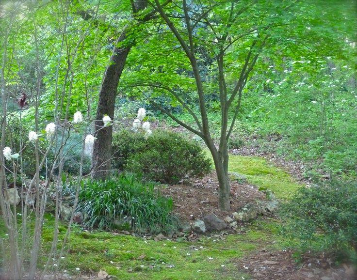 31 best woodland garden ideas images on pinterest garden for Woodland garden designs