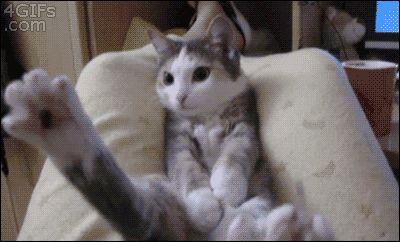 26 GIF-Beweise, dass Katzen wohl nie die Weltherrschaft übernehmen werden