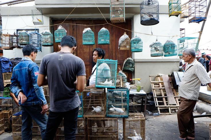 Buy Birds - i take this picture in jogja exactly in kotagede market. this bird…