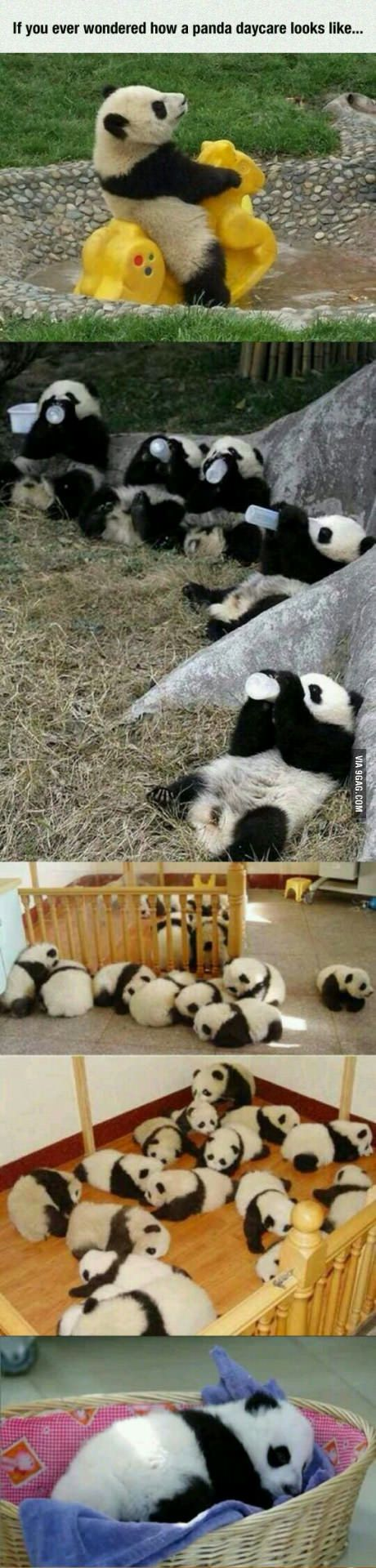 Panda daycare >>> I THINK I JUST FOUND MY DREAM JOB!!!                                                                                                                                                                                 More