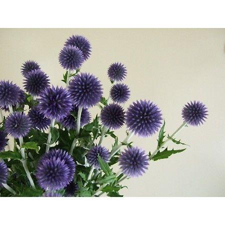 【生花】ルリタマアザミ ベッチーズブルー(3輪つき):::切り花・生花 の通販なら - はなどんやアソシエ