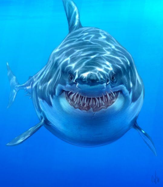 how to draw great white sharks   ... of shark week i m ...