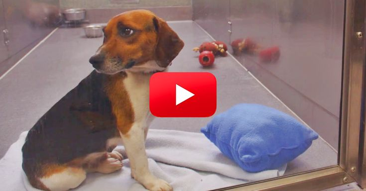 This Is Such A Touching Video. I Wish I Could Rescue All Shelter Dogs! | The Animal Rescue Site Blog