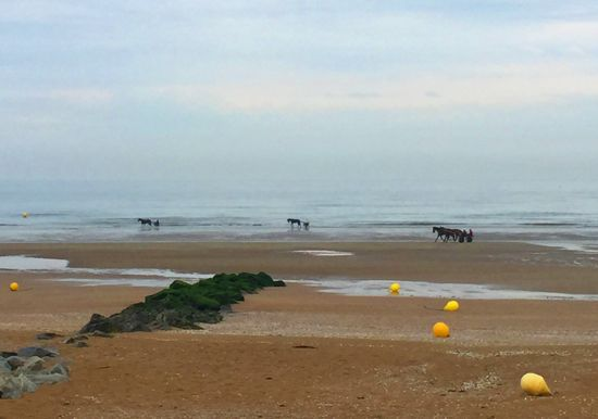 Chevaux Plage Cabourg #France #normandie #cheval #mareebasse