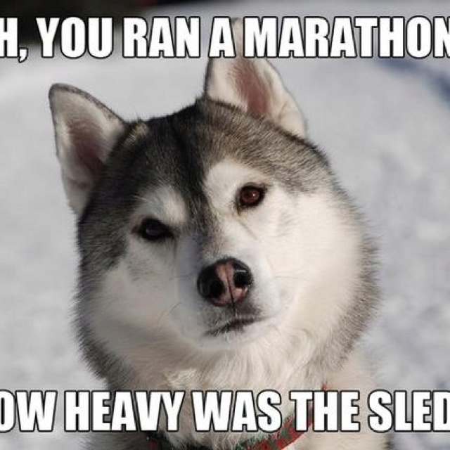 a7394f99fe5fb7e5762d02e890106096 sled dogs siberian huskies 41 best dog funnies images on pinterest animals, funny dogs and,Dog Running Meme